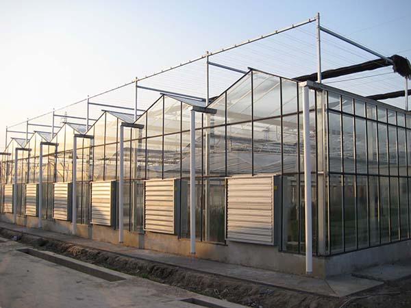 玻璃温室大棚厂家 北方玻璃大棚建造 蔬菜玻璃温室工程