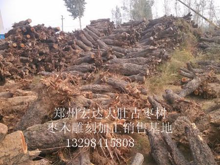 河北古枣树批发价格-大量出售河南古枣树