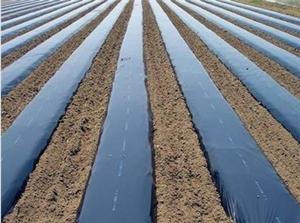 代理长寿膜_新农塑料厂优良黑白膜供应
