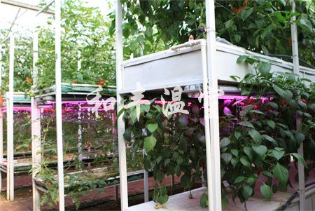 潍坊价格合理的立体栽培供应|寿光立体栽培