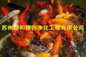 苏州祥和精创净化工程提供实用的鱼池水处理设备|苏州花园庭院鱼