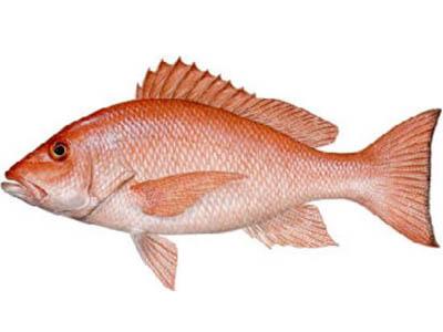 嘉峪关鱼苗批发市场|价格实惠的鱼苗就在刘家峡冷水鱼养殖基地