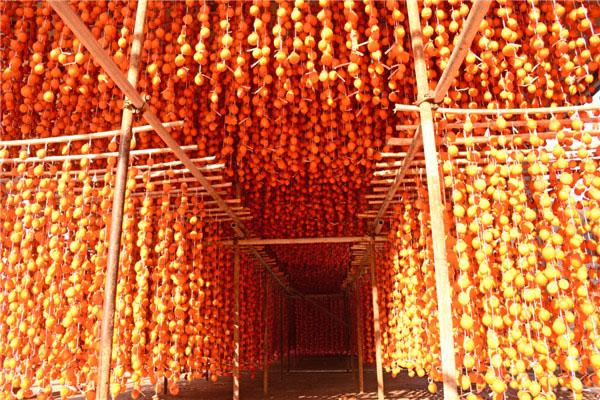 潍坊知名的柿饼供应商 微商代理产品