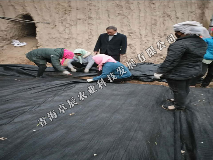 青海卓辰农业合格的羊肚菌品牌 青海羊肚菌零售