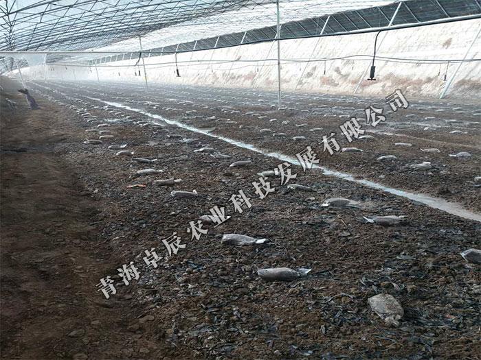 西宁羊肚菌多少钱一斤,西宁哪里有卖专业的羊肚菌