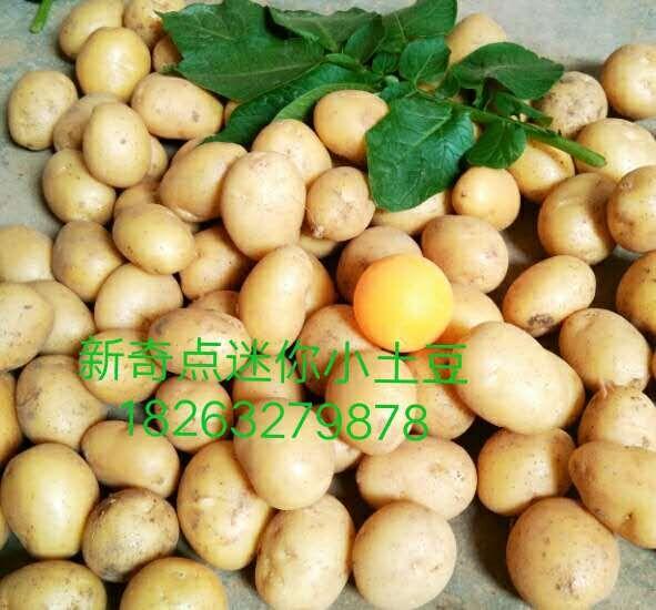 哪里能买到放心的油炸迷你小土豆,油炸小土豆低价出售