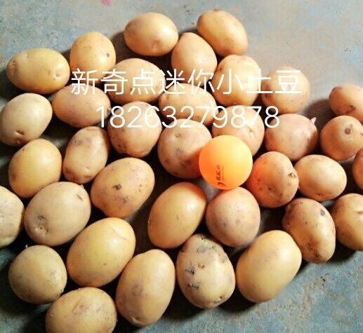 物美价廉的油炸迷你小土豆推荐,购买油炸小土豆
