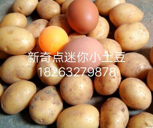 广硕商贸有限公司-声誉好的油炸迷你小土豆厂家 南开油炸小土豆