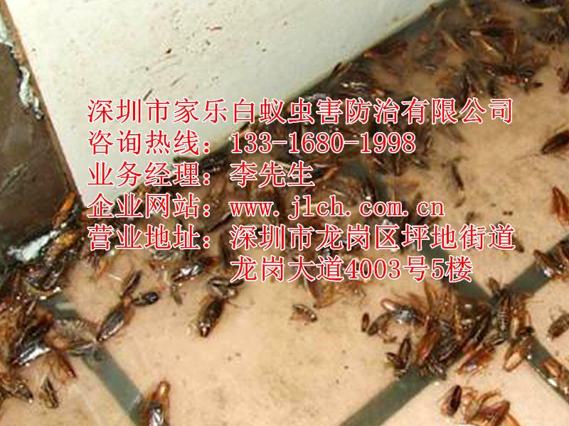 沙井除虫灭鼠_深圳沙井蟑螂防治公司品牌