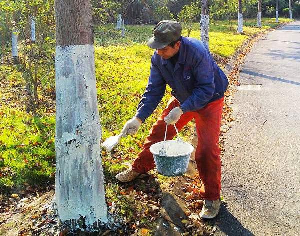 哪儿有专业的园林养护——漳州园林养护热线电话