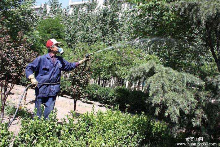 泉州园林养护热线电话|哪儿有专业的园林养护