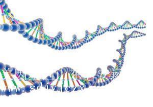 信譽好的正規DNA司法親子鑒定|臨沂地區司法DNA親子鑒定落戶口