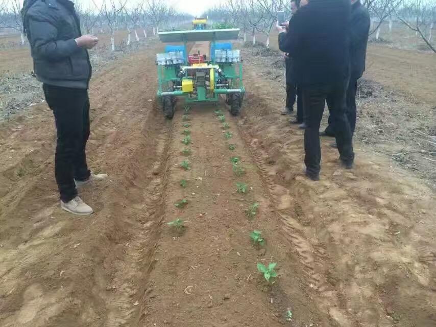 潍坊价位合理的插秧机哪里买_玫瑰、菊花移栽机-药材秧苗栽植机、插秧机厂家供应