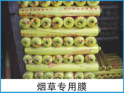 甘肃地膜批发价格|本福商贸提供?#34892;?#20215;比的地膜产品