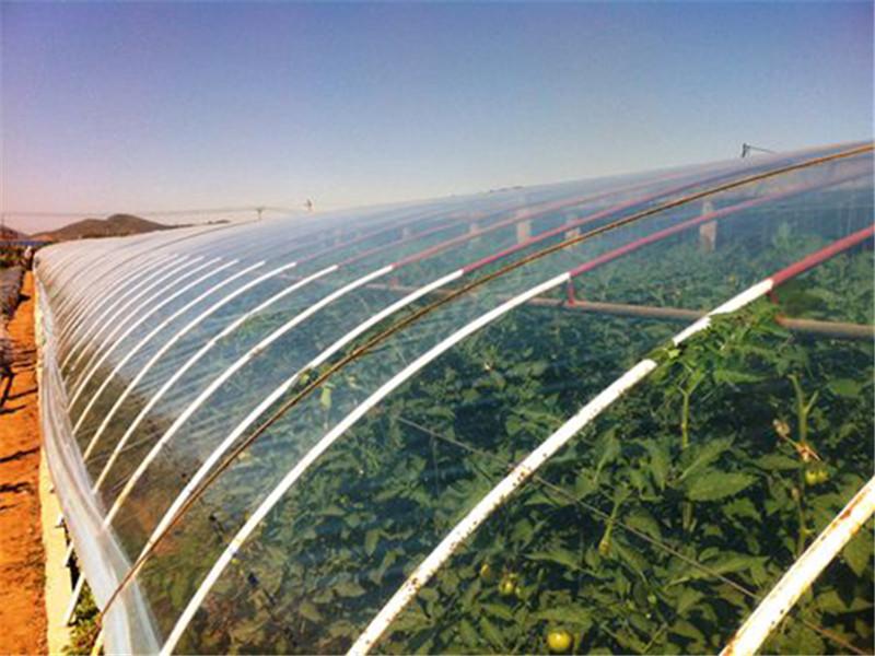 草莓专用膜报价-供应潍坊好用的po膜