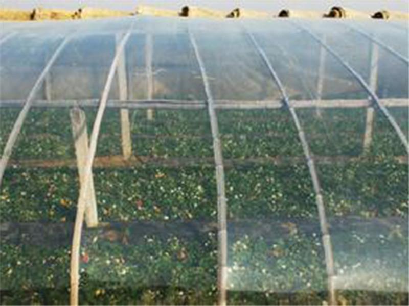 潍坊po膜供应价格,云南草莓专用膜