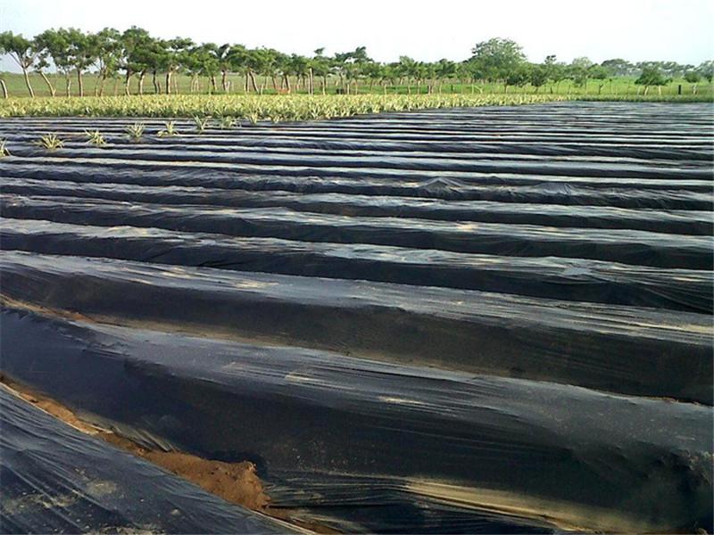 银黑地膜厂家-潍坊有品质的地膜提供商