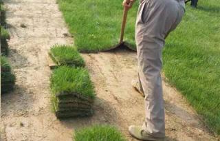 靠谱的草坪养护推荐-草坪养护方案