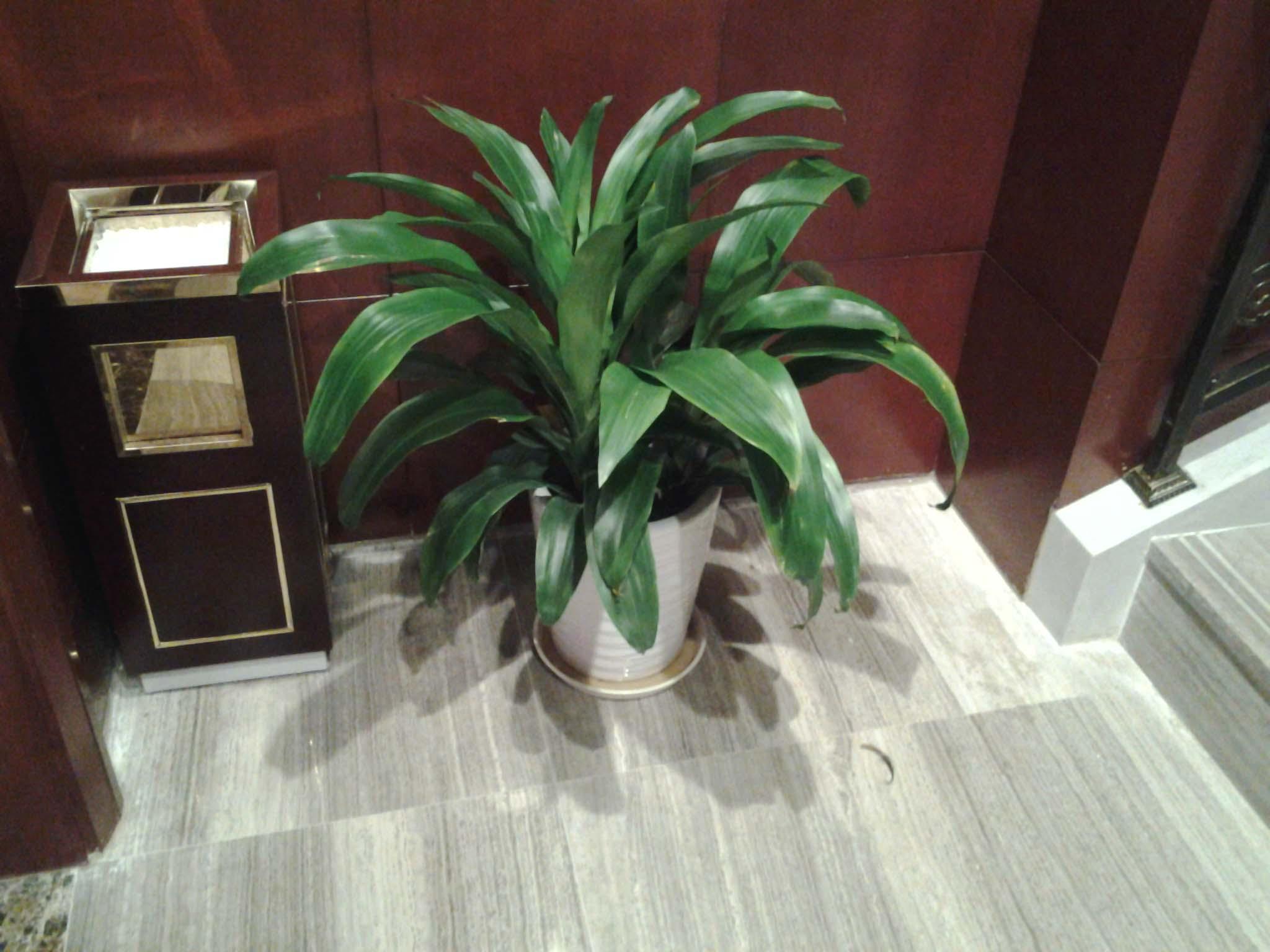 天池湾绿化服务专业提供大量出售苗圃苗木-销售草花