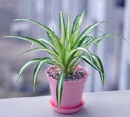 专业的草花种植提供_售楼处种花工程