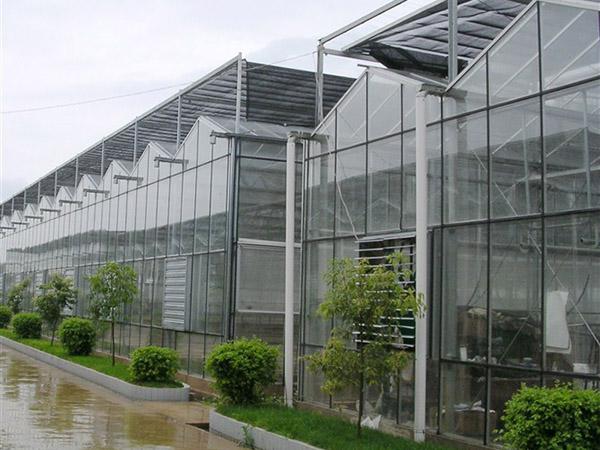 河北玻璃大棚【玻璃温室大棚】