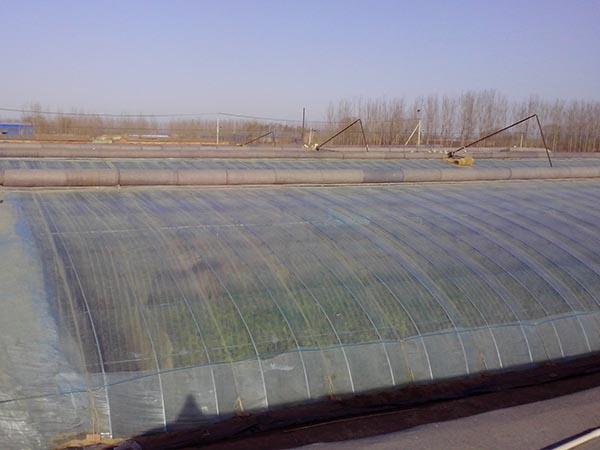 日光温室大棚,日光大棚