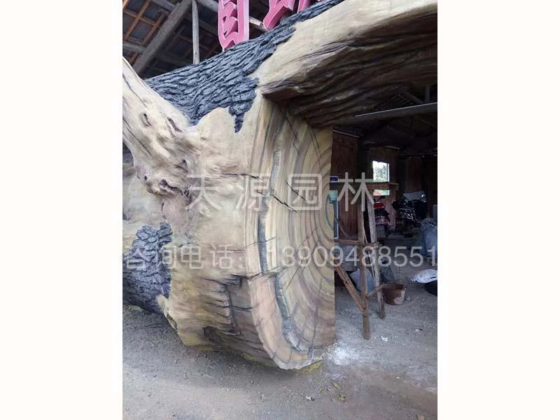 青海景观工程——供应甘肃造型优美的假树