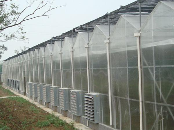 潍坊双拱双膜温室造价怎样 双拱双膜温室承建