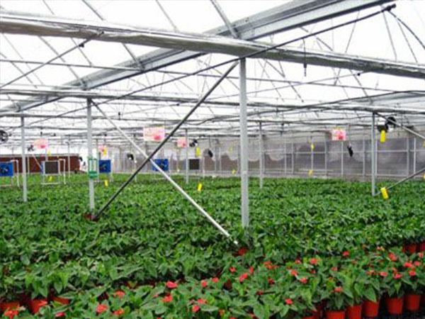 精良的花卉温室大棚供应
