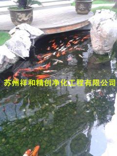 六安市室外景观别墅,单位,鱼池水发绿,找我们为你彻底处理。