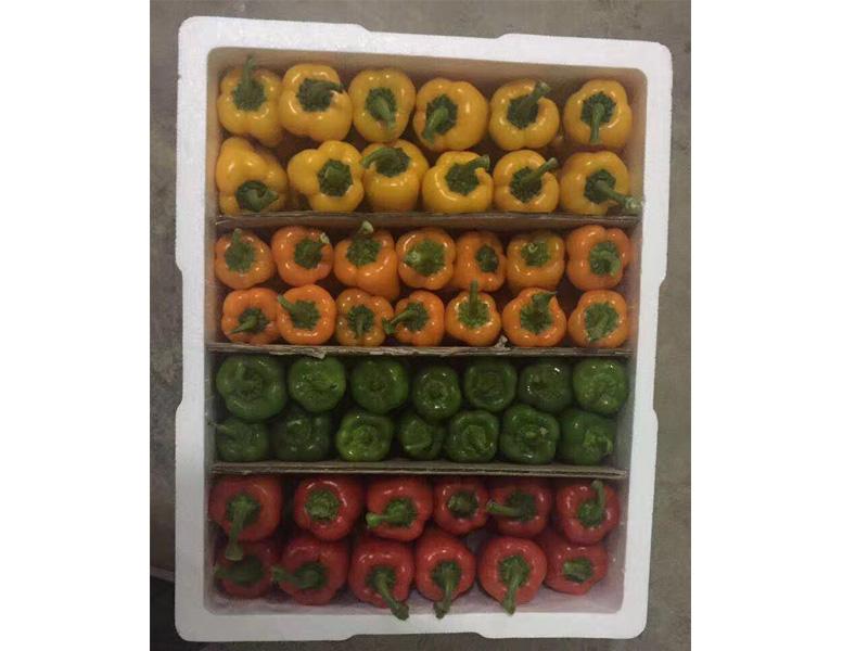 餐饮配送-泉州哪里有供应实惠的蔬菜