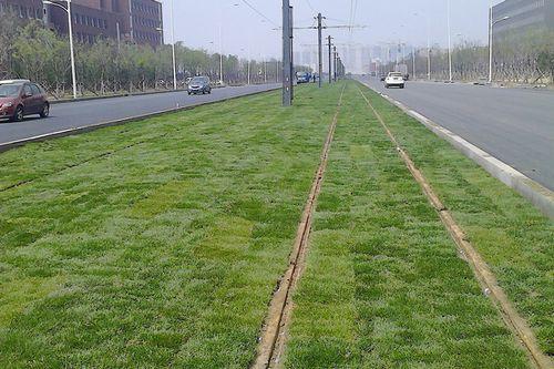 供应宁夏口碑好的兰州草坪——兰州景观草坪