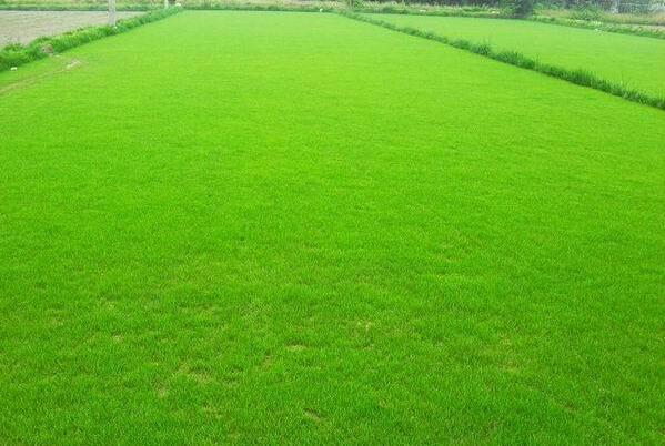 银川草坪厂家,宁夏草坪哪家好,当选银川绿景源草坪种植基地