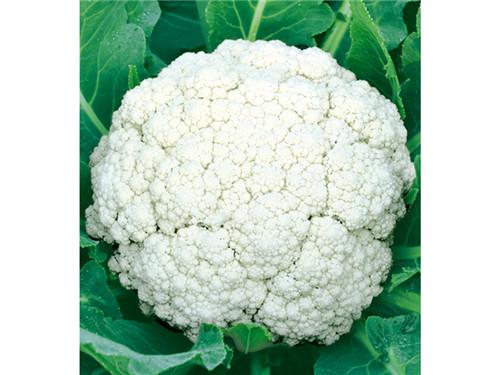 有机菜花认准布鲁斯农业科技-有机菜花
