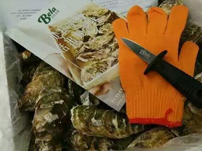 上海哪有卖净化生蚝|采购高性价生蚝就找贝拉水产