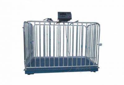 福州电子称价格-漳州区域有品质的蓄牧秤