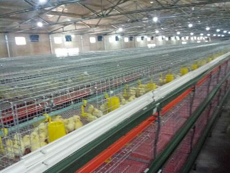 潍坊高品质标准化鸡舍批售,鸡舍升降温设备行情