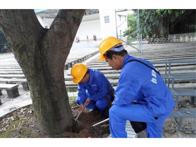 【荐】质量保证的白蚁灭杀——漳州白蚁灭杀
