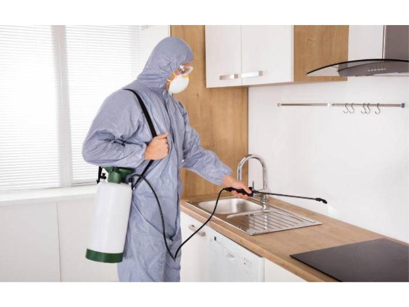 【荐】优质套房店铺白蚁防治,安全的套房店铺白蚁防治