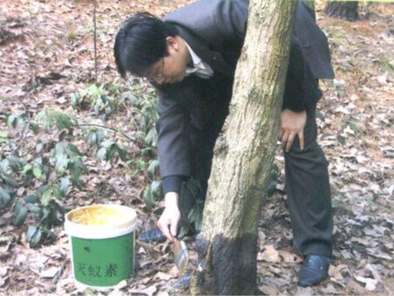 上哪找经验丰富的园林白蚁防治_园林白蚁防治平台