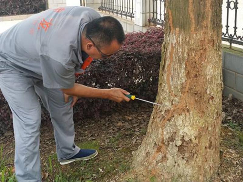 园林白蚁防治推荐 哪儿有专业的园林白蚁防治