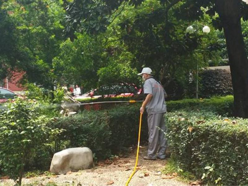 提供专业的园林白蚁防治|园林白蚁防治市场