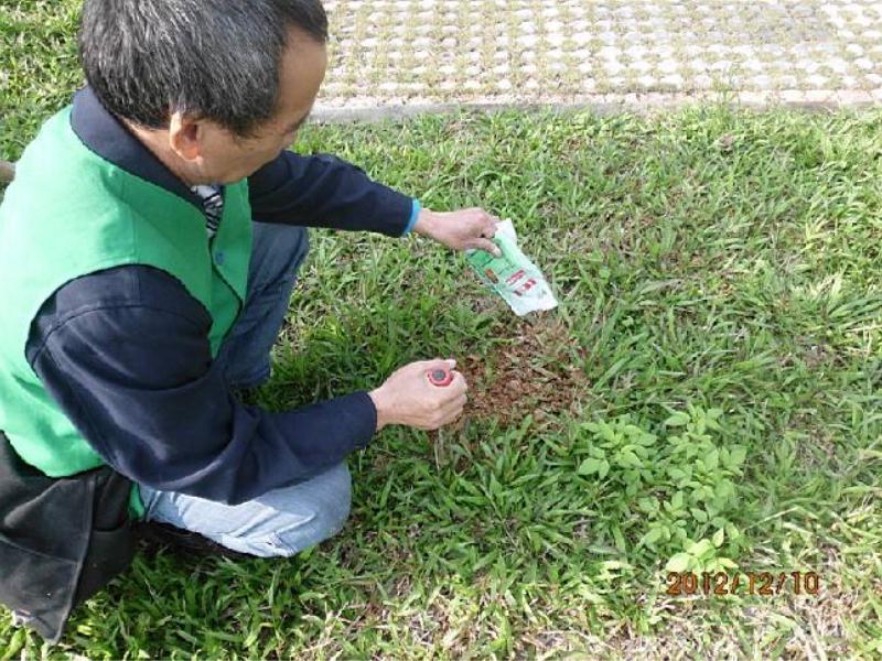 上哪找专业的园林白蚁防治——金门园林白蚁防治