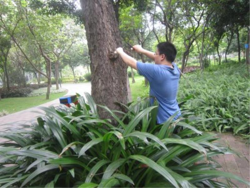 专注园林白蚁防治-专业的园林白蚁防治哪里有