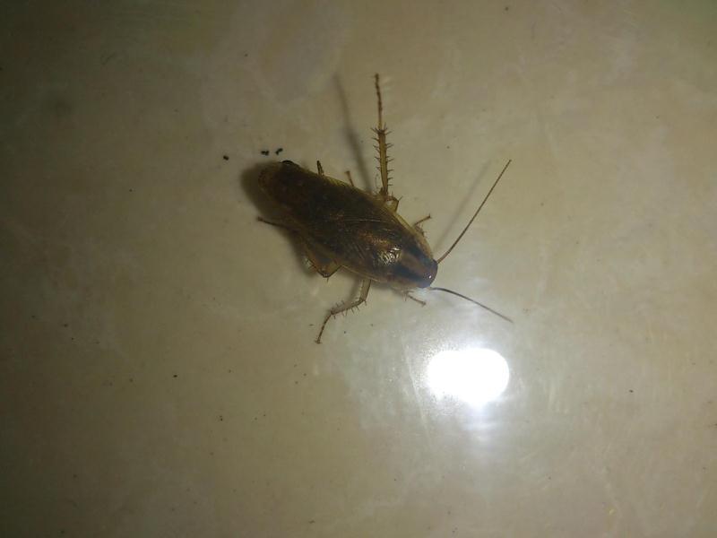 【诚荐】蟑螂消杀讯息——寻求蟑螂消杀