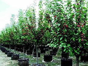 绿化苗木找宁夏银林生态园林景观 宁夏苗木