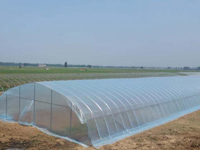 薄膜连栋温室建造-山东报价合理的单拱蔬菜大棚