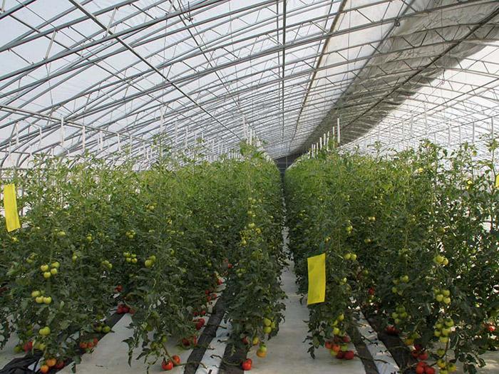 生态园艺温室工程_想建智能生态园艺温室就到博晟达农业
