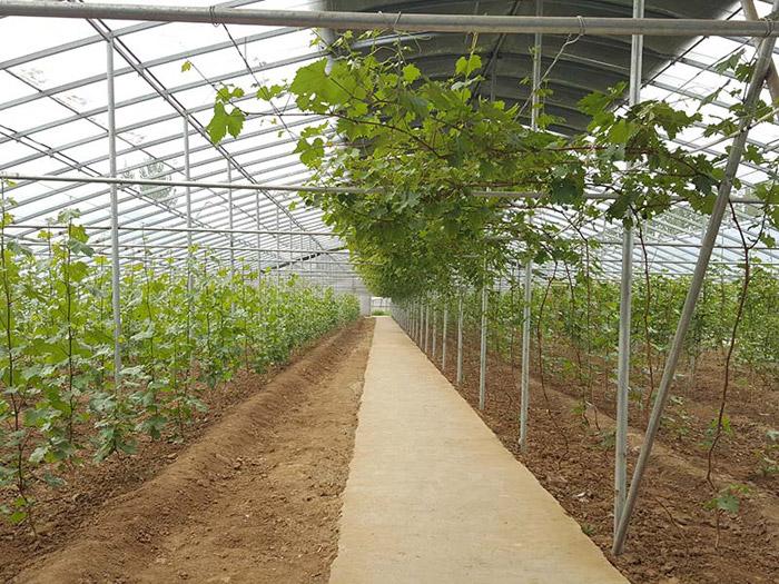 專業移動苗床制造-山東實用的智能生態園藝溫室