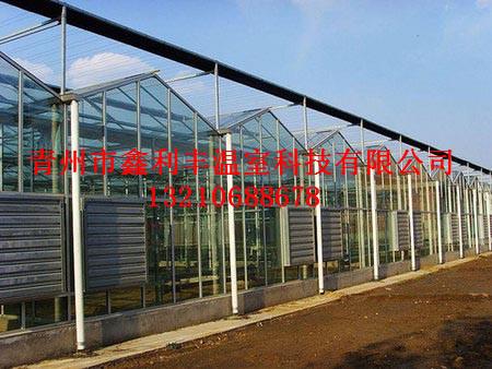 玻璃温室大棚当选鑫利丰温室科技,玻璃温室大棚